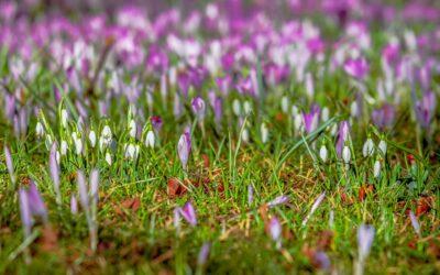 Wat een heerlijkheid, het is voorjaar!